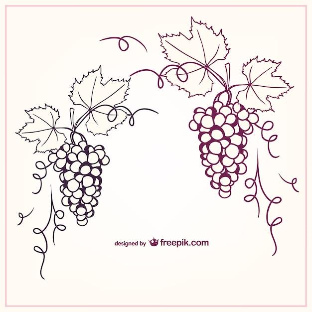 Виноград векторные иллюстрации Бесплатные векторы