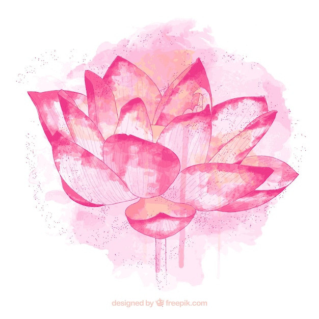 Hand Painted Lotus Flower Vector Free Download