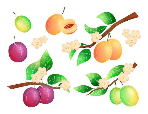 Illustrazione dell'albero di prugna dipinta a mano Vettore gratuito