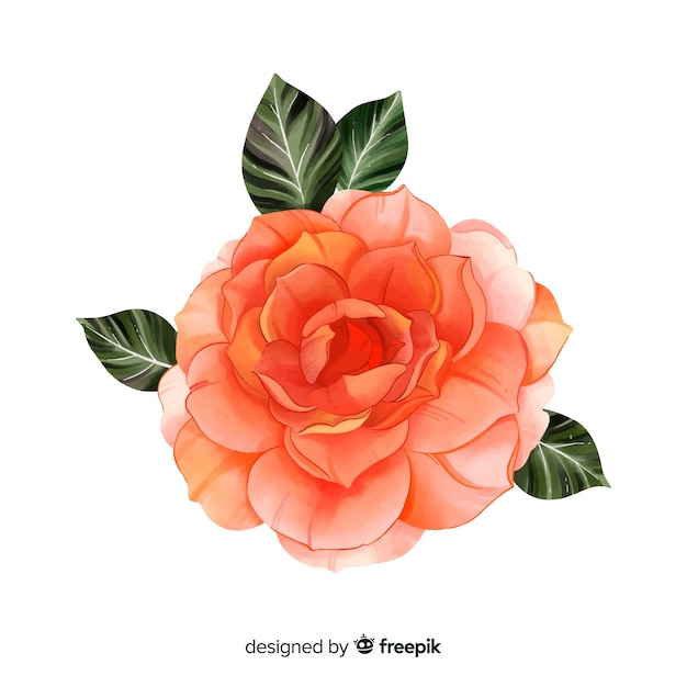 Hand painted watercolor coral flower Free Vector