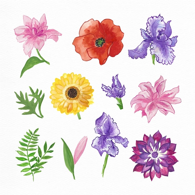 Hand painted watercolor flowers collection Free Vector