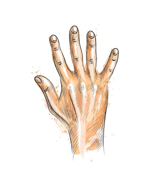 水彩のスプラッシュから5本の指を示す手、手描きのスケッチ。塗料のイラスト Premiumベクター
