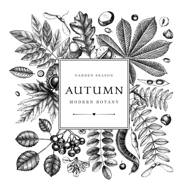 Hand sketched autumn leaves . elegant botanical template with autumn leaves, berries, seeds, forest plants sketches. perfect for invitation, greeting cards, flyers, menu, label, packaging. Premium Vector