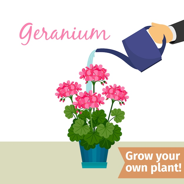 Hand watering geranuim plant Premium Vector