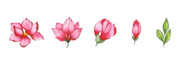 수제 수채화 꽃 예술 세트 무료 벡터