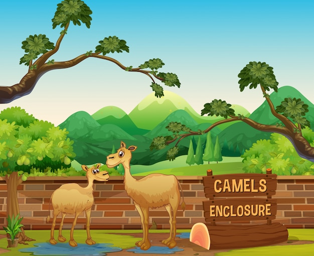 Happy camels in open zoo Free Vector