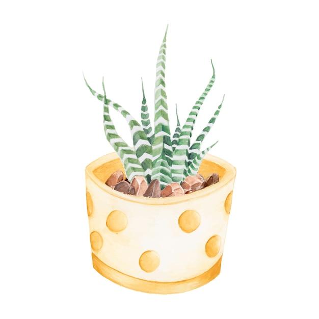 手描きhaworthia attenuataゼブラ植物 無料ベクター
