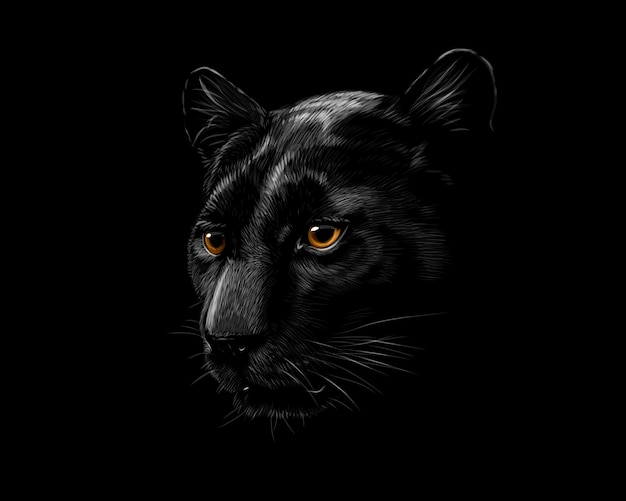 Head of a black panther isolated on a black background. vector illustration Premium Vector