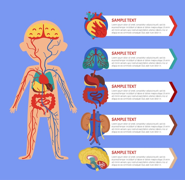 Health infographic with human body anatomy Premium Vector