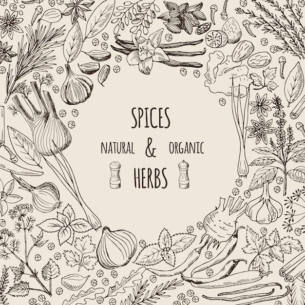 Healthy background illustrations with spices and herbs. Premium Vector