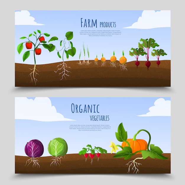 Healthy food horizontal banners Free Vector
