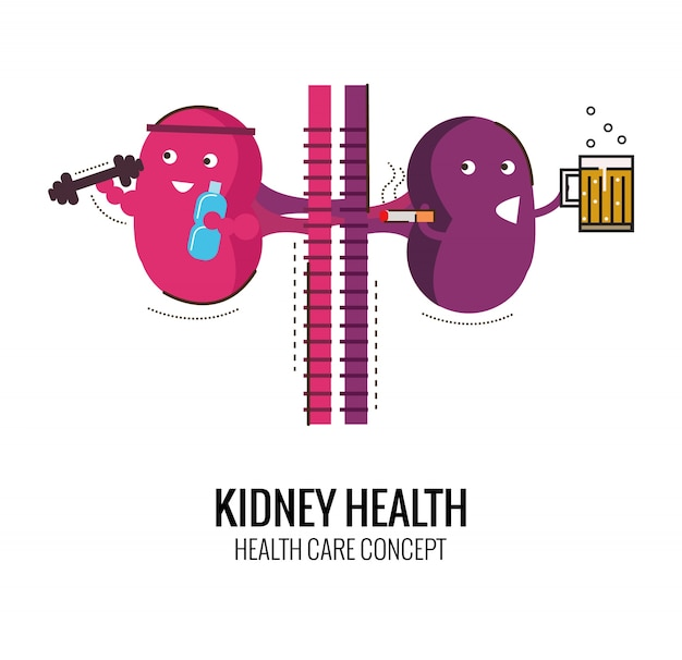 Healthy kidney and unhealthy kidney character. Danger of ...