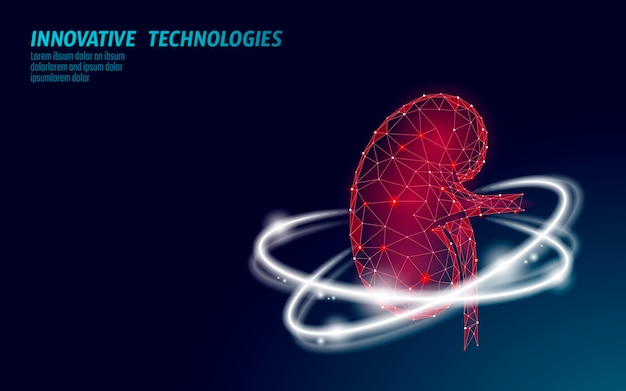 Healthy kidney internal organ 3d low poly geometric model. urology system Premium Vector