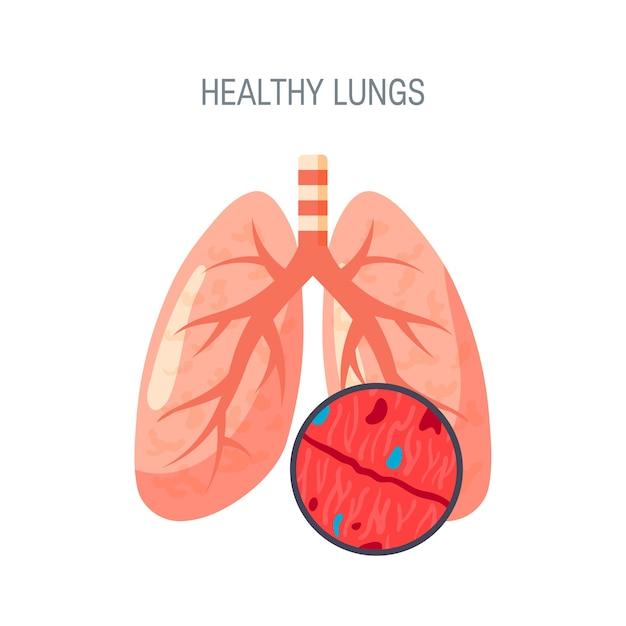白で隔離される健康な肺の概念 Premiumベクター