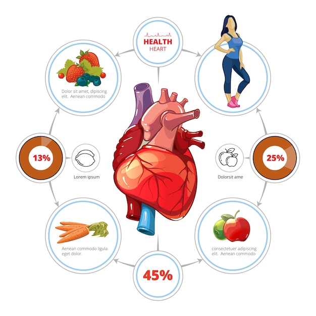 Heart medical vector infographics. organ and nutrition for healthcare, vegetable and vitamin, fruit illustration Free Vector