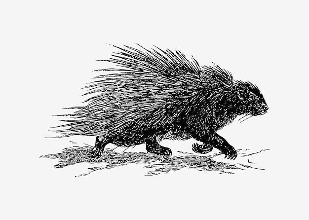 Hedgehog in vintage style Free Vector
