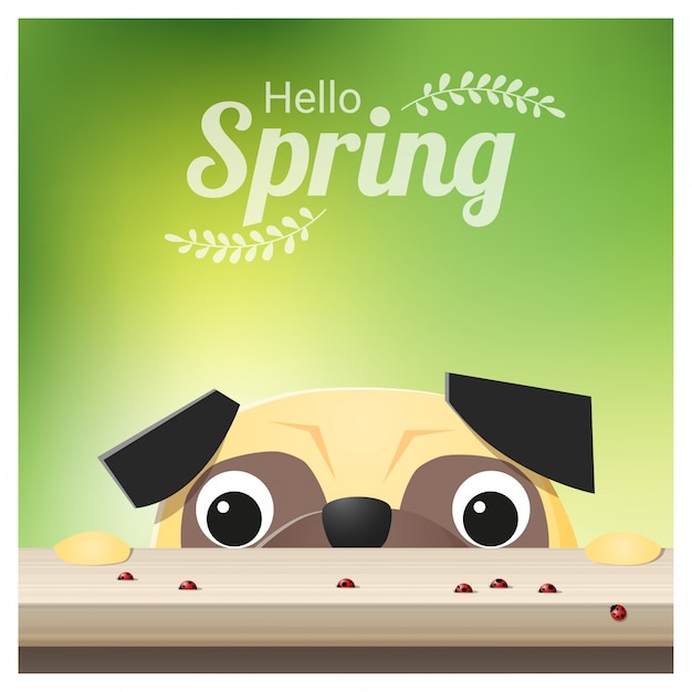 Hello spring background with pug dog looking at ladybugs Premium Vector