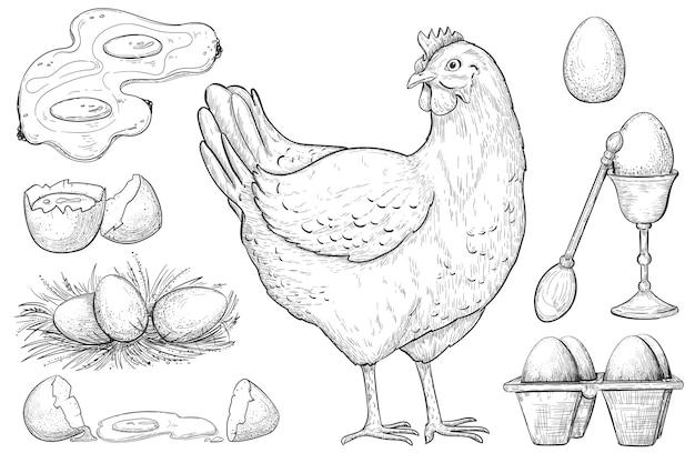 Эскиз курицы и яйца. Premium векторы