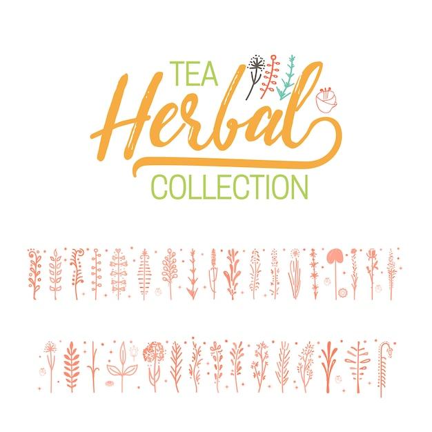 Herbal tea collection Premium Vector