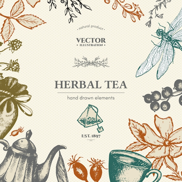 Herbal tea vector card design hand drawn vector illustration Premium Vector
