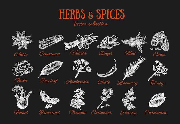 ハーブとスパイスの調味料。黒板のコレクション Premiumベクター