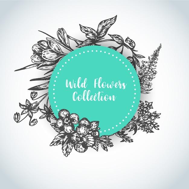 Травы и полевые цветы фон урожай коллекция растений векторные иллюстрации Premium векторы