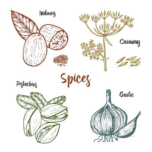Травы, приправы и специи. мускатный орех и фисташки и чеснок, тмин и семена для меню. Premium векторы