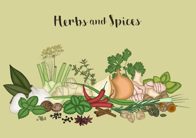 Herbs and spices background Premium Vector