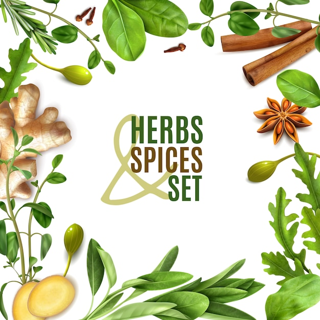 Free Vector | Herbs spices realistic square frame with fresh rosemary thyme rocket spinach leaves cinnamon ginger anise