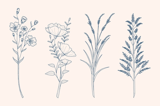 Рисование трав и полевых цветов в винтажном стиле Бесплатные векторы