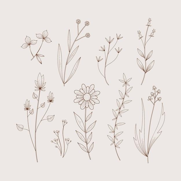 Erbe e fiori selvatici in stile design retrò Vettore gratuito