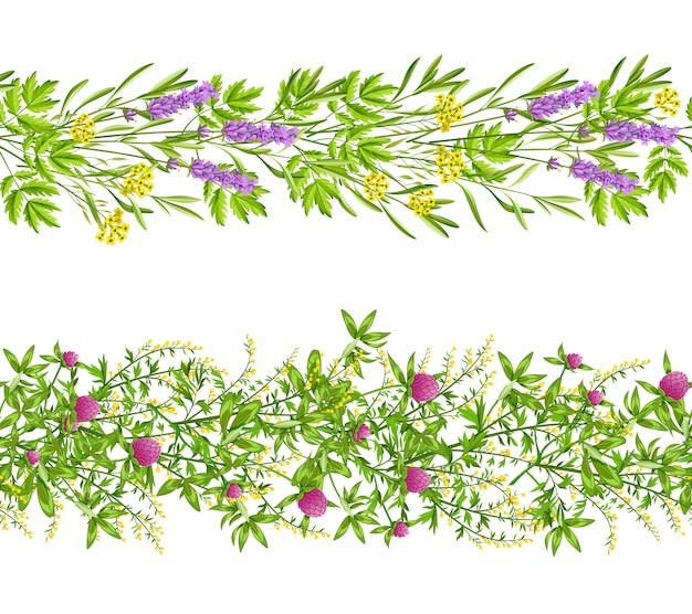 Herbs and wild flowers seamless pattern Free Vector