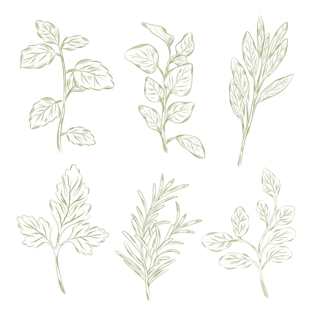 Herbs and wild flowers vintage style Free Vector
