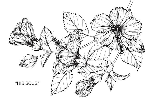 Hibiscus flower drawing illustration Premium Vector