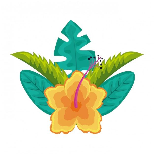 Hibiscus flower leaves palm arrangement tropical Premium Vector