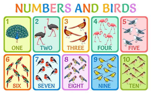 Ð¡hildren cards numbers with birds. Premium Vector