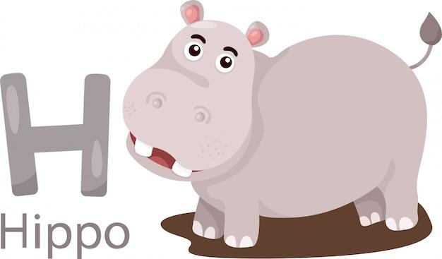Hippoのための孤立した動物のアルファベットhのイラスト Premiumベクター