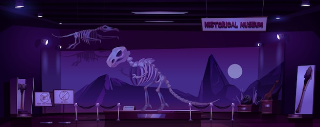 Historical museum with dinosaur skeleton and archeological exhibits at night. cartoon interior of empty dark room of exhibition with prehistoric animals and primitive tools of caveman Free Vector