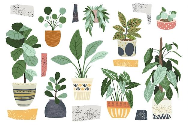Коллекции домашнего декора комнатных растений Premium векторы