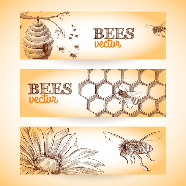 Honey bee hive comb and flower sketch banners set isolated vector illustration. Free Vector