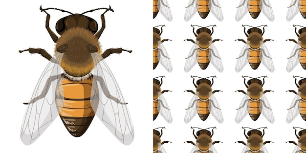 Honey bee and seemless background Free Vector