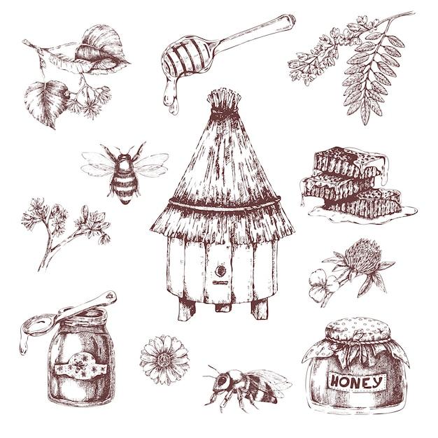 Insieme disegnato a mano di elementi di miele Vettore gratuito