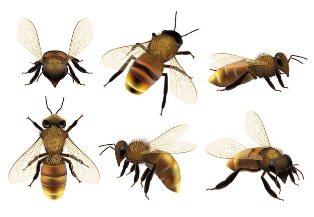 현실적인 꿀벌. 꿀벌의 말벌 자연 식물 동물 군 근접 촬영 사진을 비행하는 다른 야생 동물 위험 곤충. 프리미엄 벡터