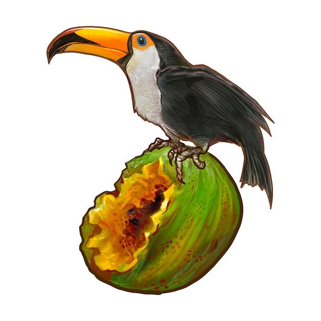 Hornbill bird on a coconut illustration Free Vector