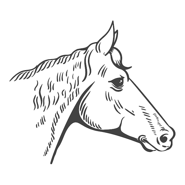 Horse head illustration isolated on white background.  element for logo, label, emblem, sign, poster, t-shirt print.  illustration. Premium Vector