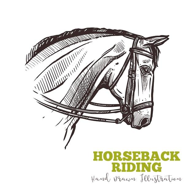 Horse head with bridle in profile sketch Premium Vector