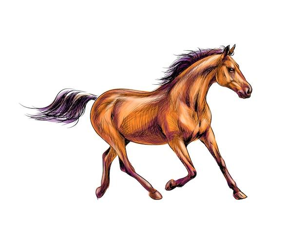 Лошадь бежит галопом от всплесков акварели. ручной обращается эскиз. иллюстрация красок Premium векторы