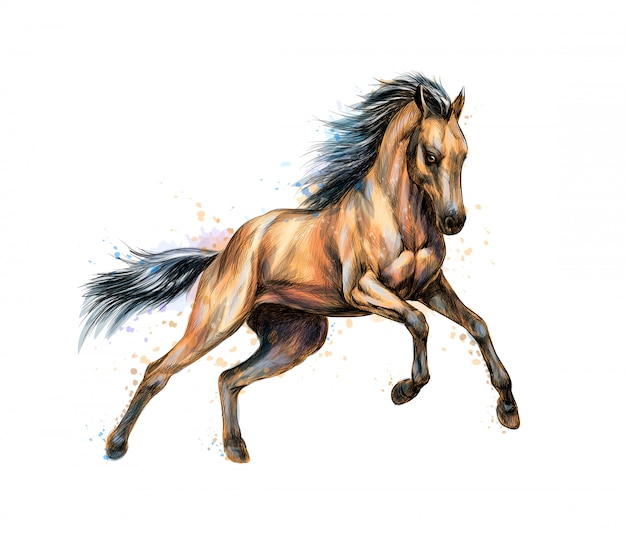 Horse run gallop from splash of watercolors. hand drawn sketch.  illustration of paints Premium Vector