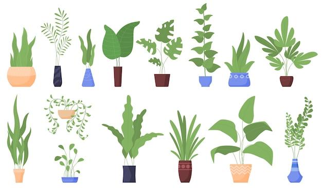 관엽 식물. 화분. 프리미엄 벡터