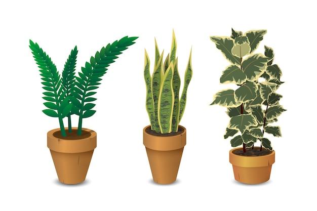 観葉植物、鉢植えの植物のセット Premiumベクター